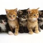 ご存知ですか? 千代田区は猫の殺処分ゼロです!