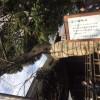 ご存じですか? 千代田のさくらまつりが、3月25日(金)から始まります!