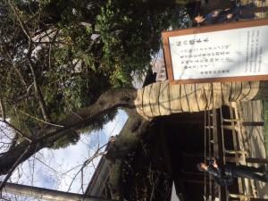 靖国神社基準木