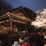 ご存じですか? 靖国神社での奉納夜桜能