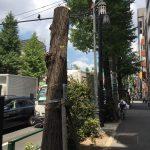 ニュースから:千代田区:街路樹伐採一時中断 「説明ない」反対の声で