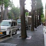 ご存じですか? 街路樹伐採(100年イチョウ並木)問題について